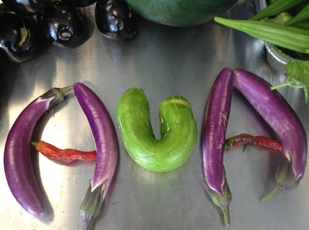 AUA in peppers