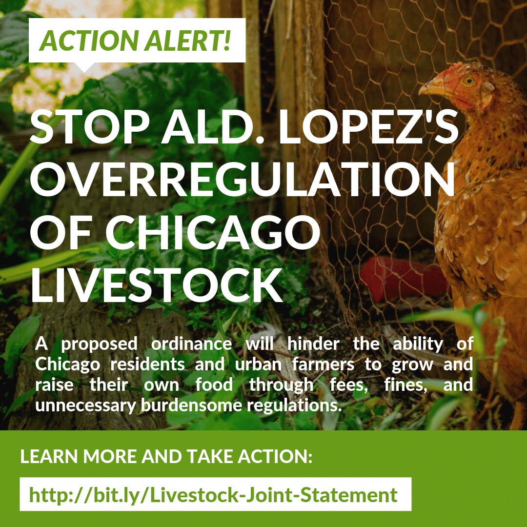 Chicago Livestock Action Alert (2)