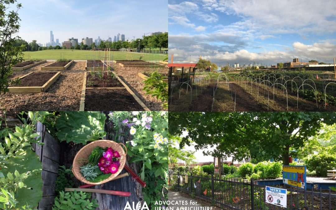 AUA Awards 67 Farmer Support Grants to Chicagoland Farms and Gardens